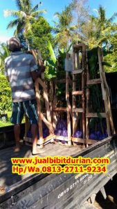 HPWA 0813-2711-9234, BIBIT DURIAN MAGELANG H. TOVIX (3)