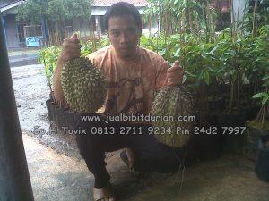 HpWa 0813-2711-9234, Bibit Durian Bawor Medan H. Tovix