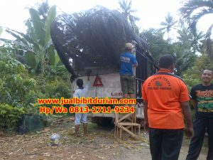 HpWa 0813-2711-9234, Bibit Durian Bawor Surabaya H. Tovix (7)