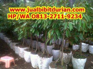HpWa 0813-2711-9234, Jual Durian Bawor Surabaya H. Tovix.jpg